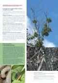 Formato - Codoc - Page 4