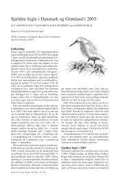 Sjældne fugle i Danmark og Grønland i 2003 - Zoologisk Museum