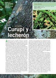 Curupí y lecherón - Aves Argentinas