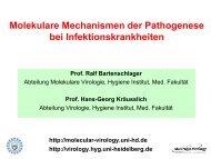 Molekulare Mechanismen der Pathogenese bei Infektionskrankheiten
