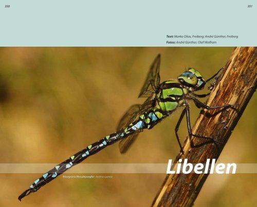 Libellen - Grüne Liga Osterzgebirge