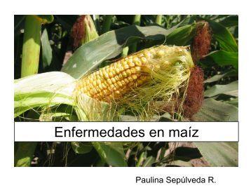 Enfermedades de maíz - Platina