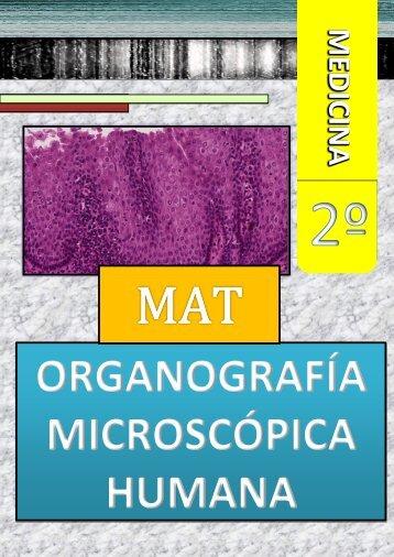 ORGANOGRAFIA MICROSCOPICA HUMANA - VeoApuntes.com