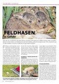 Schwyzer - WWF Schwyz - Seite 4