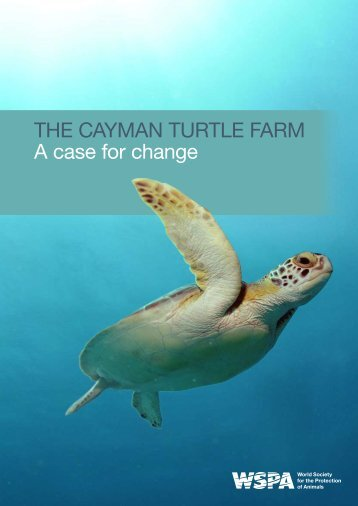 The Cayman TurTle Farm a case for change - Sea Turtle Conservancy