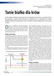 czytaj więcej (plik PDF)