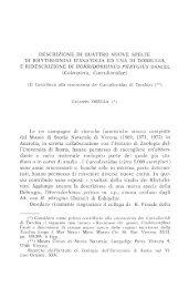 descrizione di quattro nuove specie di rhytirhinini d'anatolia ed una ...