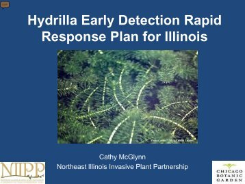 Illinois Early Detection Rapid Response Plan for Hydrilla - Midwest ...
