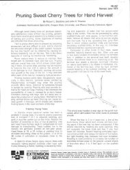 Pruning Sweet Cherry Trees for Hand Harvest 7 - ScholarsArchive at ...