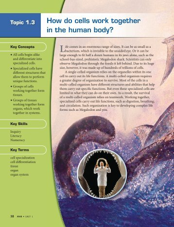 How do cells work together in the human body? - McGraw-Hill ...