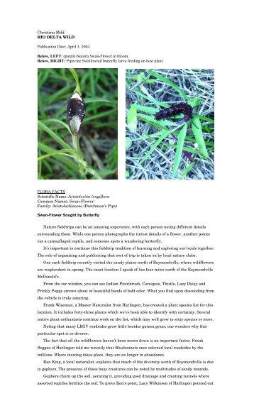 "Aristolochia longiflora - Christina Mild's ""Rio Delta Wild"""