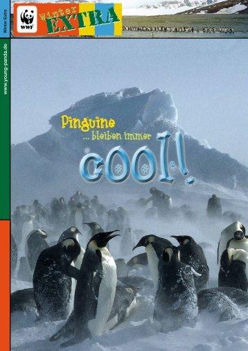 Pinguine - Young Panda