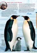 Pinguine - Young Panda - Seite 2