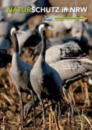 Natur erleben Zugvögel – ein Kommen und Gehen ... - NABU NRW
