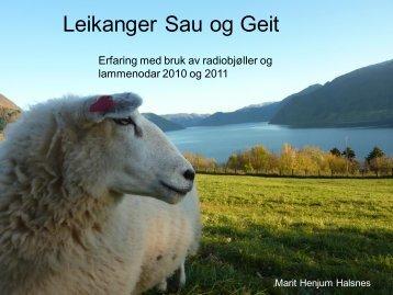radiobjøller og lammenodar - Norsk Sau og Geit