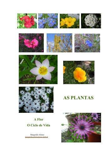 Ciclo de Vida das plantas - Ciência Viva
