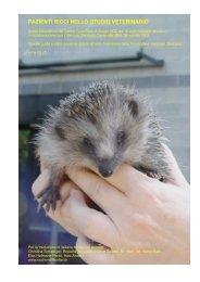 pazienti ricci nello studio veterinario - Associazione Amici del Riccio