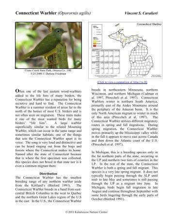 Connecticut Warbler - Michigan Breeding Bird Atlas Website