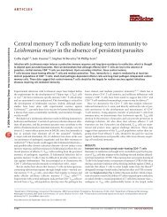 Central memory T cells mediate long-term immunity to Leishmania ...