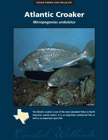 Atlantic Croaker - The State of Water