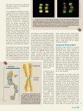 Epigenetik - Vererbung ist mehr als die Summe der Gene - Scinexx - Seite 3