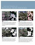Kousa Dogwoods that Resist Disease - Page 2
