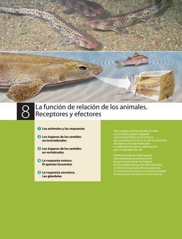relacion_reproduccion_animales