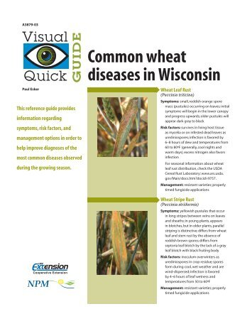 Common wheat diseases in Wisconsin - The Learning Store ...