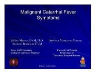 Malignant Catarrhal Fever Symptoms.pdf - College of Veterinary ...