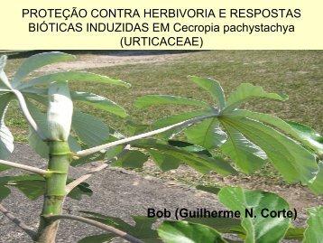 proteção contra herbivoria e respostas bióticas induzidas em