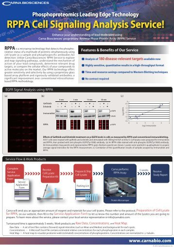 RPPA Cell Signaling Analysis Service!