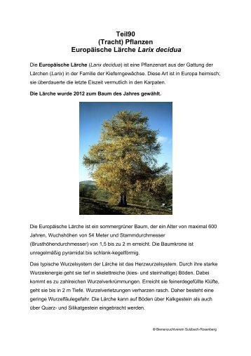 Teil90 (Tracht) Pflanzen Europäische Lärche Larix decidua