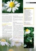 amille - Seite 4