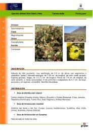 Opuntia dillenii (Ker-Gawl.) Haw. Tunera india - Interreg Bionatura