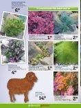 sommerlIeBe - Gartencenter Fahr Dornstetten - Seite 6