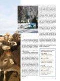 La passion des suisses brunes et de l'agriculture - Fédération des ... - Page 2