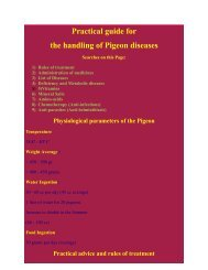 Practical guide for the handling of Pigeon diseases