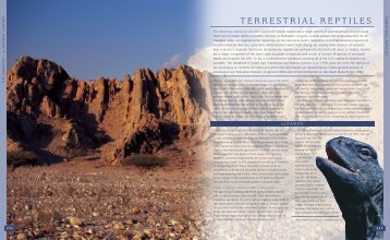 TERRESTRIAL REPTILES - UAE Interact