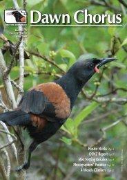 Dawn Chorus - Tiritiri Matangi