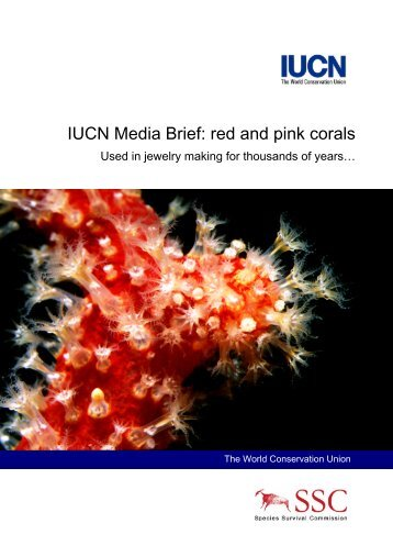 IUCN Media Brief: red and pink corals