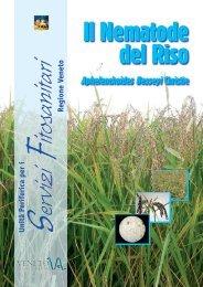 Il Nematode del riso - Veneto Agricoltura