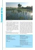 Il Nematode del riso - Veneto Agricoltura - Page 4
