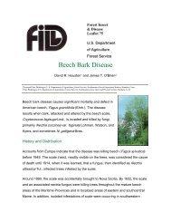 Beech Bark Disease - New York State Envirothon