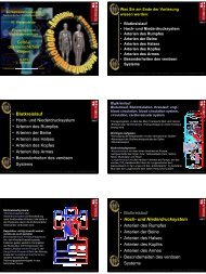 Blutkreislauf • Hoch- und Niederdrucksystem • Arterien des Rumpfes ...