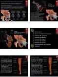Blutkreislauf • Hoch- und Niederdrucksystem • Arterien des Rumpfes ... - Seite 4