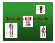 Muscles of the Body - gst boces