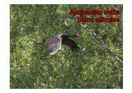 Apdraudēto meža putnu stāvoklis