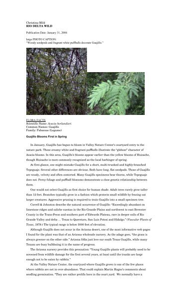 "Acacia berlandieri - Christina Mild's ""Rio Delta Wild"""