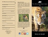 WILD AT HEART - The Wildcat Sanctuary