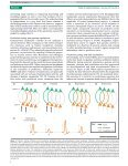 Arnal cortical oscillations.pdf - Page 6